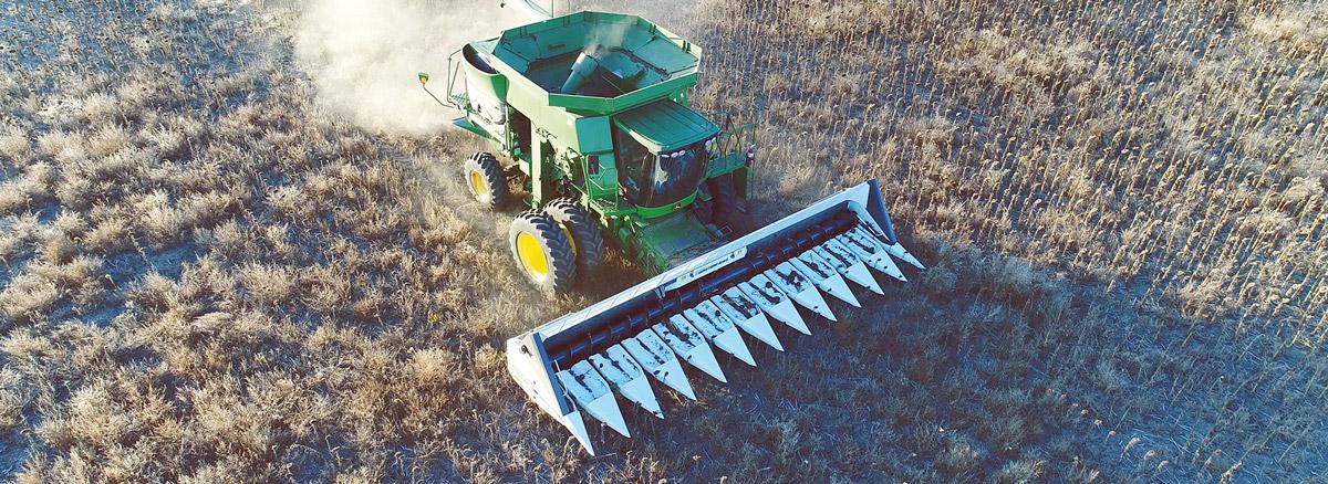 sunflower header rows