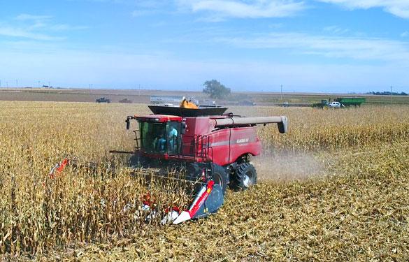 cabezal de maíz máxima productividad